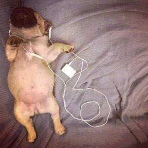 65260-Puppy-Listening-To-Music
